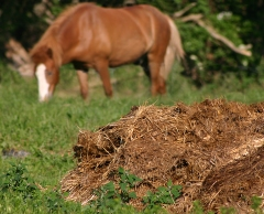 A pile of brown manure to front and right in a meadow with a chestnut coloured horse in the background slightly out of focus